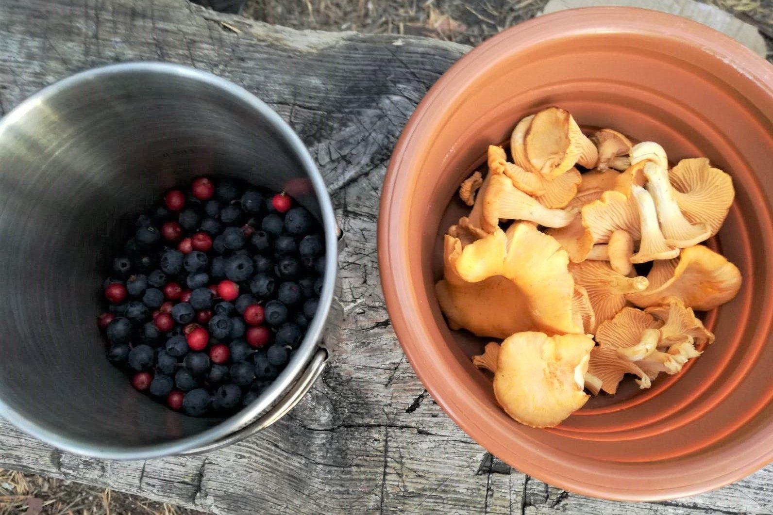 Heidelbeeren, Preiselbeeren und Pfifferlinge auf Trekkingtour in Schweden