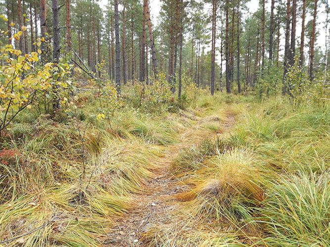 Fernwanderweg Sörmlandsleden in Schweden mit Gras