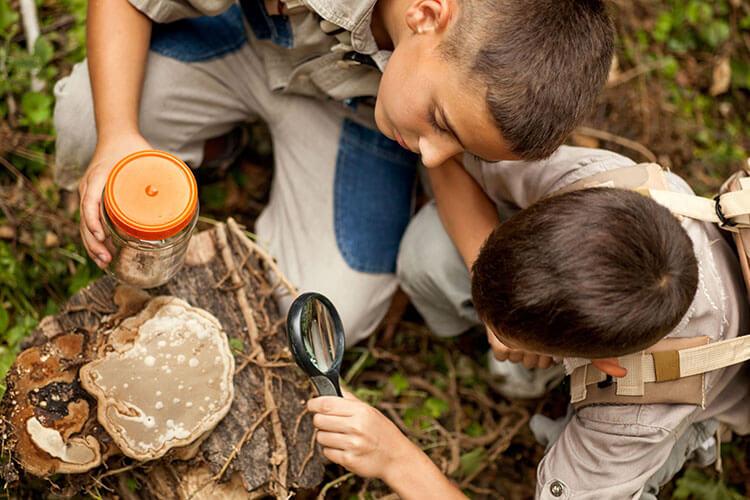 Jungs erforschen bei Familie Naturwochenende den Wald