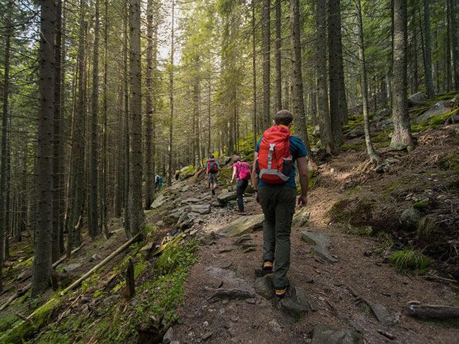 Wanderer auf Trekkingtour im Wald