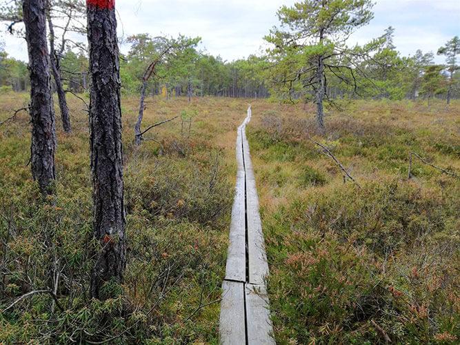 Holzsteg über Trekkingweg Sörmlandsleden in Schweden
