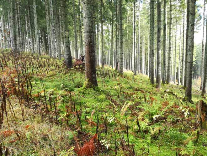 Naturschutz beim Trekking einhalten