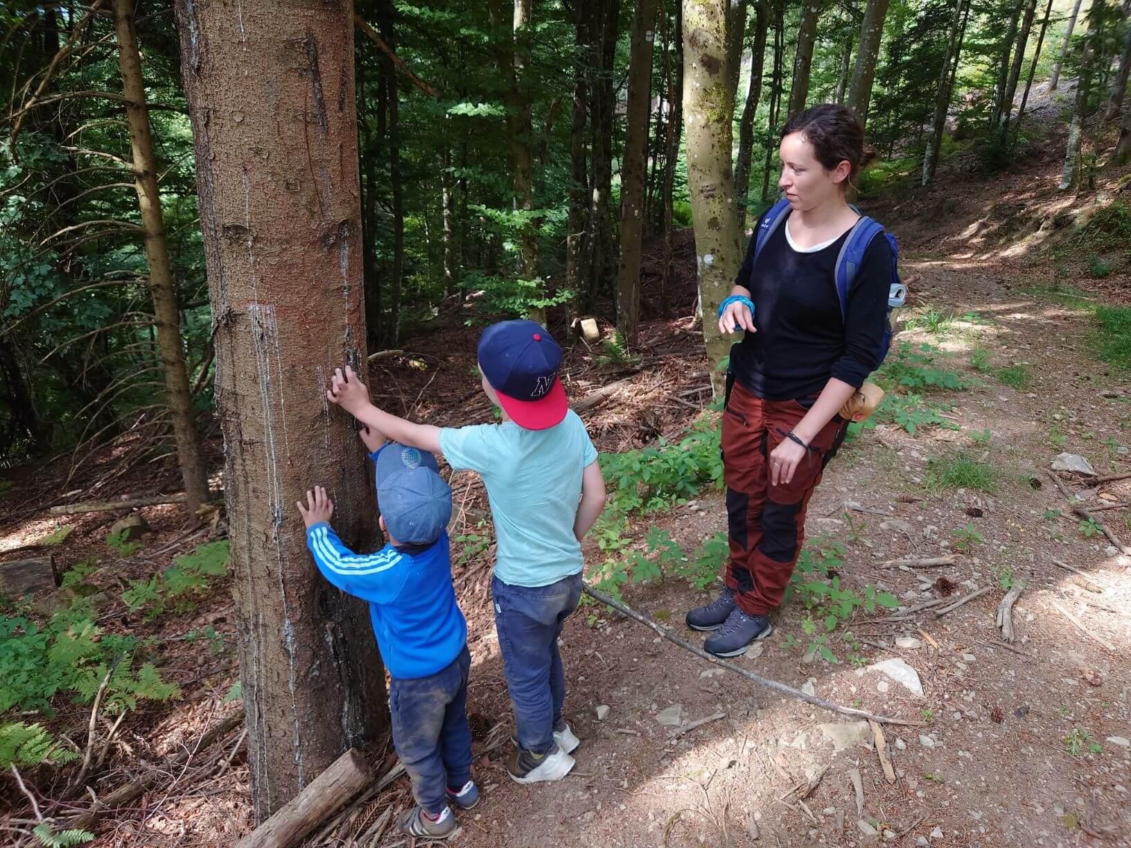 Bäume entdecken bei Familien Abenteuer im Wald